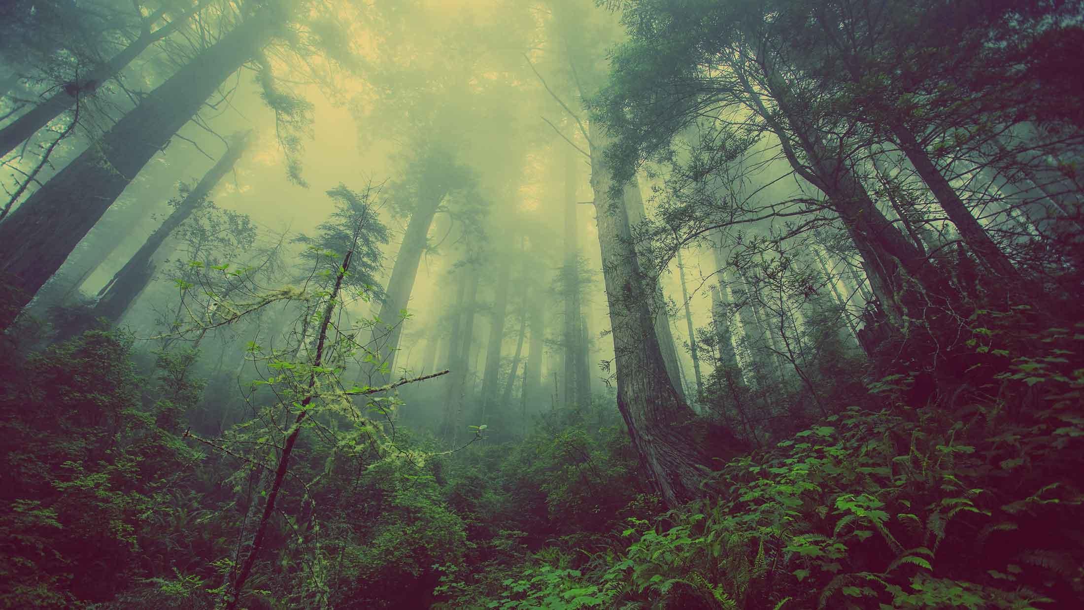 Waldpflege und Forstbetrieb Benedikt Kraft